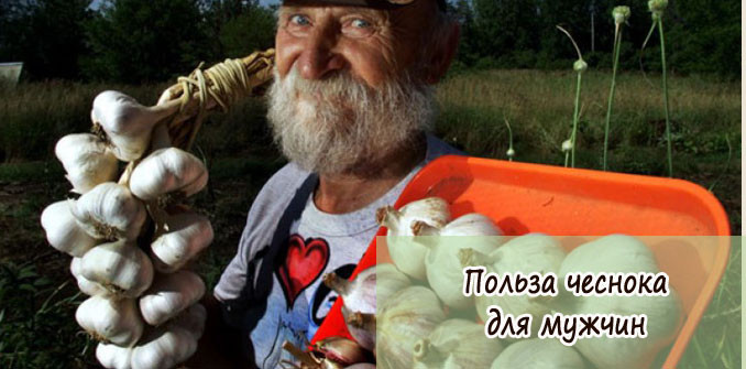 Польза чеснока для мужчин