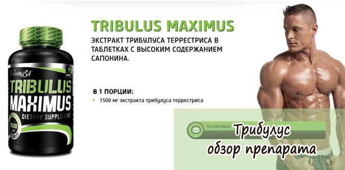 Трибулус: отзывы, цена, инструкция по применению