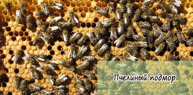 пчелиный подмор для мужчин