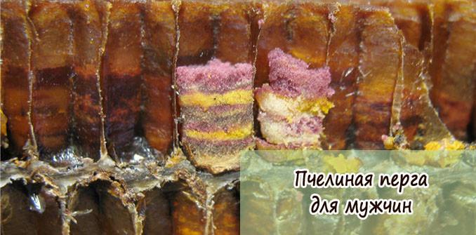 пчелиная перга для мужчин