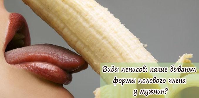 Виды пенисов