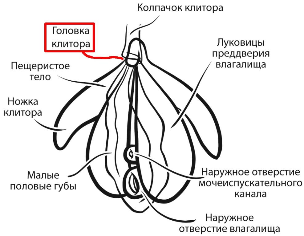 головка клитора